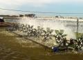 Sự phân tầng nước trong ao nuôi và vai trò của lưu thông nước