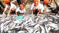 Phát triển cá tra không thể mãi kiểu mua là bán!