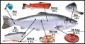 Sử dụng hiệu quả phụ phẩm thủy sản đem lại giá trị cao