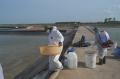 Dịch bệnh tấn công tôm ở Móng Cái: Đã có gần 330 ha tôm bị chết