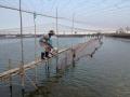 Quản lý ao tôm công nghiệp trước tình hình dịch bệnh tràn lan