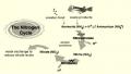 Sử dụng hiệu quả vi khuẩn nitrat hóa trong ao tôm
