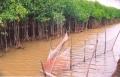 Kỹ thuật nuôi trồng thủy sản kết hợp trồng rừng