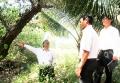 Cần phục hồi rừng ngập mặn Tuần Lễ