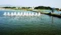 Xử lý nước thải ao nuôi thủy sản bằng Rươi
