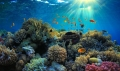 Hầu hết các loài cá săn mồi đã biến mất ở các rạn san hô thuộc vùng biển Caribe.