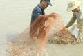 Tình hình sản xuất và nuôi trồng thủy sản 10 tháng 2017