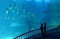 Singapore sắp khai trương bể cá lớn nhất thể giới