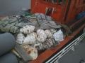 Phát hiện tàu cá chở hơn 150 con sò tai tượng