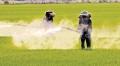 Ảnh hưởng thuốc diệt cỏ glyphosate đối với cua