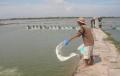 Một số khuyến cáo sử dụng thuốc thủy sản cho tôm nuôi thâm canh, bán thâm canh