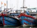 Nhiều tàu cá đã vào được khu vực tránh bão an toàn