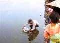 Hỗ trợ gần 15 ngàn cá giống cho người dân Phú Lộc, Phú Vang và Quảng Điền