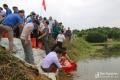 Nghệ An: Thả hơn 1.000kg cá giống tái tạo nguồn lợi thủy sản