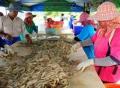 Năm 2015 - Ngành tôm Thái Lan với nhiều nỗi lo