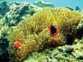 Soi dân số sinh vật biển sống dưới thảm cỏ biển