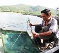 Ninh Hòa: Thủy sản nuôi trồng mất mùa