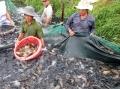 Góc nhìn thủy sản Việt từ thị trường nội địa