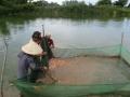 Ông Lê Văn Hoàng: Thành công với mô hình nuôi cá giống