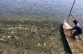 Diện tích và sản lượng cá tra Đồng bằng sông Cửu Long tăng