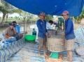 Biến vườn rẫy thành ao nuôi cá lóc hiệu quả