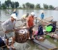 Ngành cá tra: Sẵn sàng từ miếng phi lê đến ẩm thực !