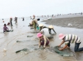 Quản lý và bảo tồn nguồn lợi nghêu giống vùng biển ven bờ