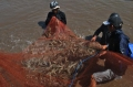 Tỉnh Bạc Liêu tăng cường công tác quản lý nuôi tôm nước lợ các tháng còn lại năm 2013