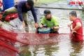 Hà Tĩnh: Giá tăng cao, người nuôi tôm Hà Tĩnh lãi lớn
