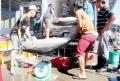 Giá cá ngừ đại dương bị thao túng