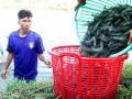 Làm sạch môi trường từ nuôi trồng kết hợp