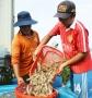 Ngăn thương lái Trung Quốc mua bán không hợp pháp ở Việt Nam