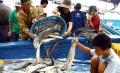 Các mặt hàng thủy sản sẽ đội giá vào những tháng cuối năm