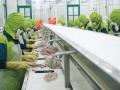 Dự án 2.000 tỷ có đưa Thủy sản Hùng Vương vào chân sóng?