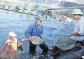 Thanh Hóa: Sản lượng nuôi trồng thủy sản tăng 16,4%