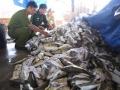Buộc tiêu hủy hải sản không an toàn