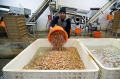 Sản lượng tôm nuôi của In-đô-nê-xi-a có thể tăng mạnh
