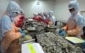 Xuất khẩu tôm sang EU tăng 6,4%
