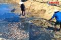 Tôm chết hàng loạt ở Kỳ Anh: Nghi bị sốc nước do bão