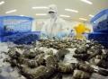 Xuất khẩu tôm sang Mỹ nửa cuối năm sẽ phục hồi
