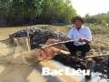 Mô hình tôm - rừng: Tôm thoi thóp chết vì nắng nóng