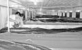 Thanh Hóa: Ứng dụng tiến bộ khoa học - kỹ thuật sản xuất đa dạng đối tượng giống thủy sản