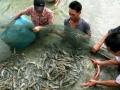 Inđônêxia khẳng định không trợ cấp cho ngành tôm