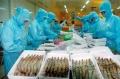 Kiểm soát tồn dư hóa chất kháng sinh trong tôm
