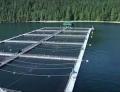 Trang trại cá hồi Marine Harvest thử nghiệm thiết bị năng lượng sóng