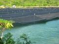 Nghề rong biển với triển vọng kinh tế và bảo vệ môi trường