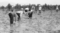 Khôi phục và phát triển rừng ngập mặn ở Quảng Ninh