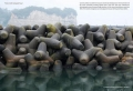 Bạn đã bao giờ nhìn thấy trụ chắn sóng ven biển? Một nhà thiết kế vừa tìm ra cách biến chúng thành rừng ngập mặn