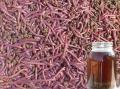 Tỉ lệ sống cao nhờ nuôi tôm hùm bằng chế phẩm sinh học