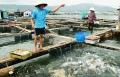 Quảng Ninh: Tín hiệu vui từ ngành Thuỷ sản